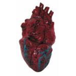 Heart Prop